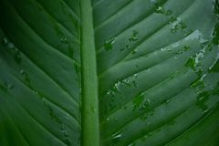 Vattendroppe på den gröna palmbladet Royaltyfri Foto