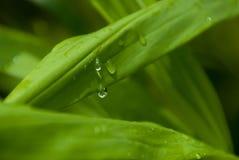 Vattendroppe på ett blad efter regn Arkivfoton