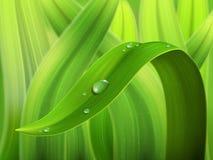Vattendroppe på gräsmakro Arkivfoton
