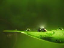 Vattendroppe på leafen Arkivfoto
