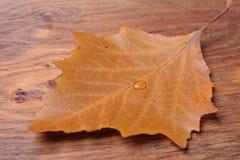 Vattendroppe på leafen arkivbild