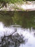 Vattendroppe på satillafloden royaltyfri bild