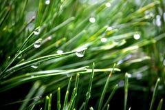 Vattendroppe sörjer på bladet Arkivfoton