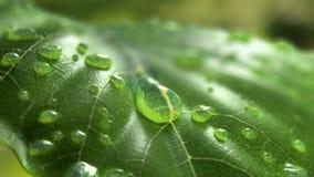 Vattendroppflöden ner på ett blad