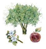 Vattenfärgäppleträd Arkivbild