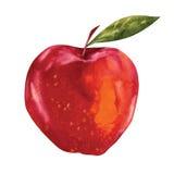 Vattenfärg Apple Arkivbilder