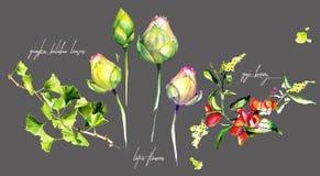 Vattenfärg av Lotus blommor, bär och Ginkgosidor royaltyfri illustrationer