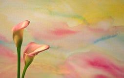 vattenfärg för 2 callaliljar Royaltyfria Foton