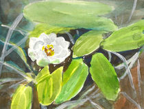Vattenfärg för vit lilja Arkivbilder