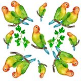 Vattenfärg hand-målad illustration av papegojor Royaltyfri Bild
