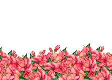 Vattenfärg hand-målat blom- baner i tropisk stil Royaltyfria Foton