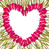 VATTENFÄRG hjärta-formad kransgränsram MED MÅLADE rosa TULPAN Fotografering för Bildbyråer