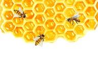 Vattenfärg Honeycomd och bi vektor illustrationer