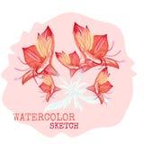 Vattenfärg målade vektorblommor royaltyfri illustrationer