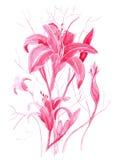 Vattenfärg med liljan på en vit bakgrund Royaltyfria Bilder