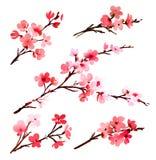 Vattenfärg med vårträdet i blomning royaltyfri illustrationer