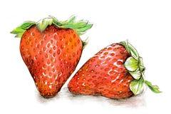 Vattenfärg- och blyertspennaillustration av jordgubbar Fotografering för Bildbyråer
