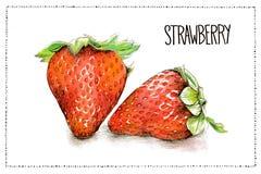 Vattenfärg- och blyertspennaillustration av jordgubbar med handskriftjordgubben Arkivbilder