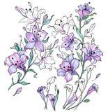 Vattenfärg och svartkontur av lila liljor Arkivfoto