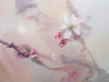 Vattenfärg Sakura för vit blomma Arkivbild