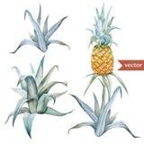 Vattenfärg som är tropisk, ananas som är exotisk, modell Royaltyfria Foton