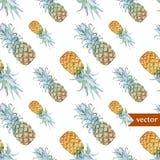 Vattenfärg som är tropisk, ananas som är exotisk, modell Royaltyfri Fotografi