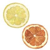 Vattenfärgapelsin- och citronuppsättning Räcka den målade citrusa matillustrationen som isoleras på vit bakgrund _ arkivbild