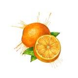 Vattenfärgapelsinen skissar stock illustrationer