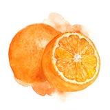 Vattenfärgapelsinillustration Arkivbild