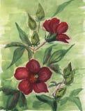 Vattenfärgbakgrund med blommor, brunn - som passas för vykort royaltyfri illustrationer