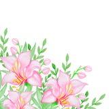 Vattenfärgbakgrund med rosa blommor Arkivfoton
