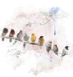 Vattenfärgbild av att sätta sig fåglar Arkivbild