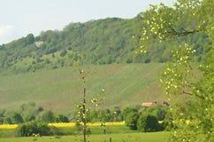 Vattenfärgbild av vingårdar på en grön kulle arkivfoto
