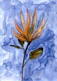 Vattenfärgblomma Blom- hand målad illustration Royaltyfri Foto