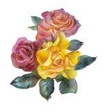 Vattenfärgbukett av rosor arkivbilder