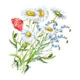 Vattenfärgbukettkamomillar med vallmo Abstrakt blom- bakgrund stock illustrationer