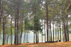 Vattenfärgen av sörjer träd bredvid en sjö Royaltyfri Bild