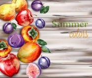 Vattenfärgen bär frukt på träbakgrundsvektor Läcker persimon, plommoner, fikonträd och mango stock illustrationer