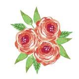 Vattenfärgen blommar buketten röda ro vektor illustrationer