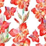 Vattenfärgen blommar glagiolus på en vit bakgrund Royaltyfria Foton