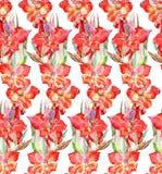 Vattenfärgen blommar glagiolus på en vit bakgrund stock illustrationer
