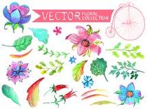 Vattenfärgen blommar samlingen Royaltyfri Bild