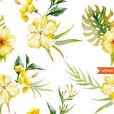 Vattenfärgen hibiskusen, orkidén, vit, gömma i handflatan, tropiskt, modellen, bakgrund, tapet Arkivbilder