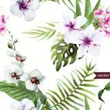 Vattenfärgen hibiskusen, orkidén, vit, gömma i handflatan, tropiskt, modellen, bakgrund, tapet Royaltyfri Fotografi