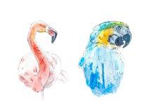 Vattenfärgen skissar av blåa munkhättor och rosa flamingo stock illustrationer