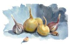 Vattenfärgen skissar grönsaker för toatoes för rädisa för paprika för gruppmorötter trädgårds- Arkivfoto