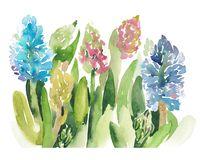 Vattenfärgen skissar illustrationen av hyacintblommor Arkivfoto