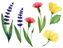 Vattenfärgen ställde in av lösa blommor vektor illustrationer