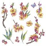 Vattenfärgen ställde in av naturliga beståndsdelar för våren, tappningblommor, bloo royaltyfri illustrationer