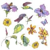 Vattenfärgen ställde in av purpurfärgade gula vildblommor, krullning och butterfli royaltyfri illustrationer